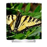 Wild Butterfly Shower Curtain
