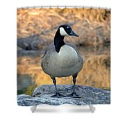Wild Canadian Goose Shower Curtain