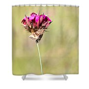 Wild Carnation With Nocturnal Moth Shower Curtain