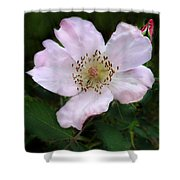 Wild Carolina Rose Shower Curtain