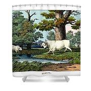 Wild Cattle Of Britain Shower Curtain
