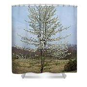 Wild Cherry Tree In Spring Bloom Shower Curtain