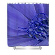 Wild Chicory Macro Shower Curtain