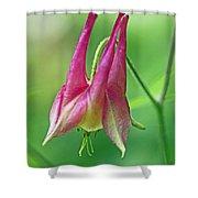 Wild Columbine Wildflower - Aquilegia Canadensis Shower Curtain