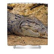 Wild Croc #2 Shower Curtain