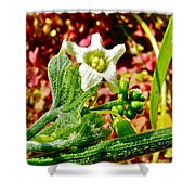 Wild Cucumber In Park Sierra Near Coarsegold-california  Shower Curtain
