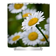 Wild Daisies After The Rain Shower Curtain