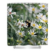 Wild Daisies And The Bumblebee Shower Curtain