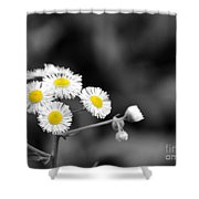 Wild Daisies Shower Curtain