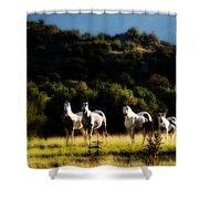 Wild Dream Shower Curtain