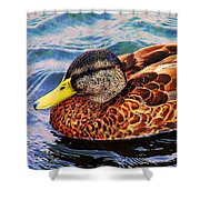 Wild Duck  Shower Curtain