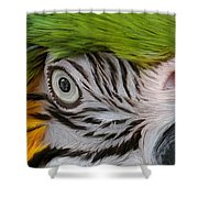 Wild Eyes - Parrot Shower Curtain