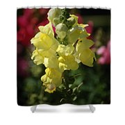 Wild Flower 2 Shower Curtain