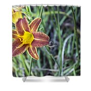 Wild Flower Shower Curtain