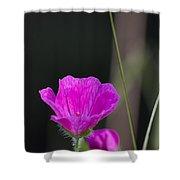 Wild Flower Bloody Cranesbill Shower Curtain