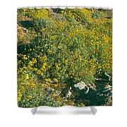 Wild Flowers, Anza Borrego Desert State Shower Curtain