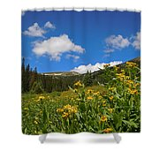 Wild Flowers In Rocky Mountain National Park Shower Curtain