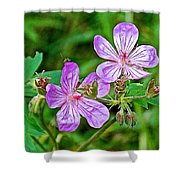 Wild Geranium On Trail To Swan Lake In Grand Teton National Park-wyoming Shower Curtain