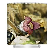 Wild Ginger Wildflower - Asarum Canadense Shower Curtain