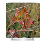 Wild Gooseberry Leaves Shower Curtain