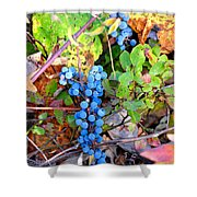 Wild Grapes Shower Curtain