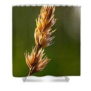 Wild Grass 2 Shower Curtain