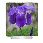 Wild Growing Iris Croatia Shower Curtain