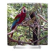 Wild Hawaiian Parrot  Shower Curtain