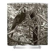 Wild Hawaiian Parrot Sepia Shower Curtain
