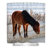 Wild Horse At Sunrise Shower Curtain