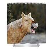 Wild Horse Chuckle Shower Curtain