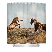 Wild Horse Fight Shower Curtain