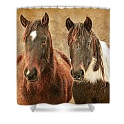 Wild Horse Pair Shower Curtain