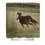 Wild Horse Running-signed-#7273 Shower Curtain