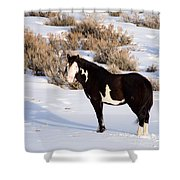 Wild Horse Stallion Shower Curtain