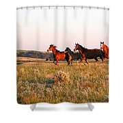 Wild Horses At Sunset Shower Curtain
