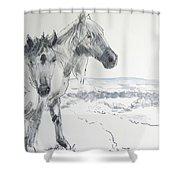 Wild Horses Drawing Shower Curtain