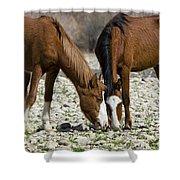 Wild Horses Grazing  Shower Curtain