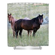Wild Horses In The Badlands Shower Curtain