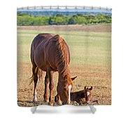 Wild Horses Mother And Baby Shower Curtain