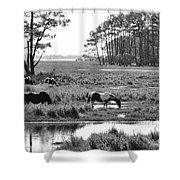 Wild Horses Of Assateague Feeding Shower Curtain by Dan Friend