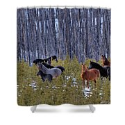 Wild Horses Of The Ghost Forest Shower Curtain