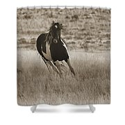 Wild Horses-sepia-signed-#7288 Shower Curtain