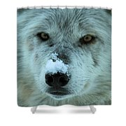 Wild Intensity Shower Curtain