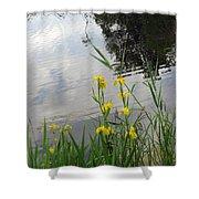 Wild Iris By The Pond Shower Curtain by Ausra Huntington nee Paulauskaite
