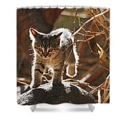 Wild Kitten Happy To Be Alive Shower Curtain