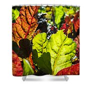 Wild Lettuce Shower Curtain