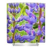 Wild Lupine Flowers Shower Curtain