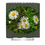 Wild Miniature Daisies Shower Curtain