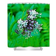 Wild Mint On Great Glacier Trail In Glacier National Park-british Columbia Shower Curtain